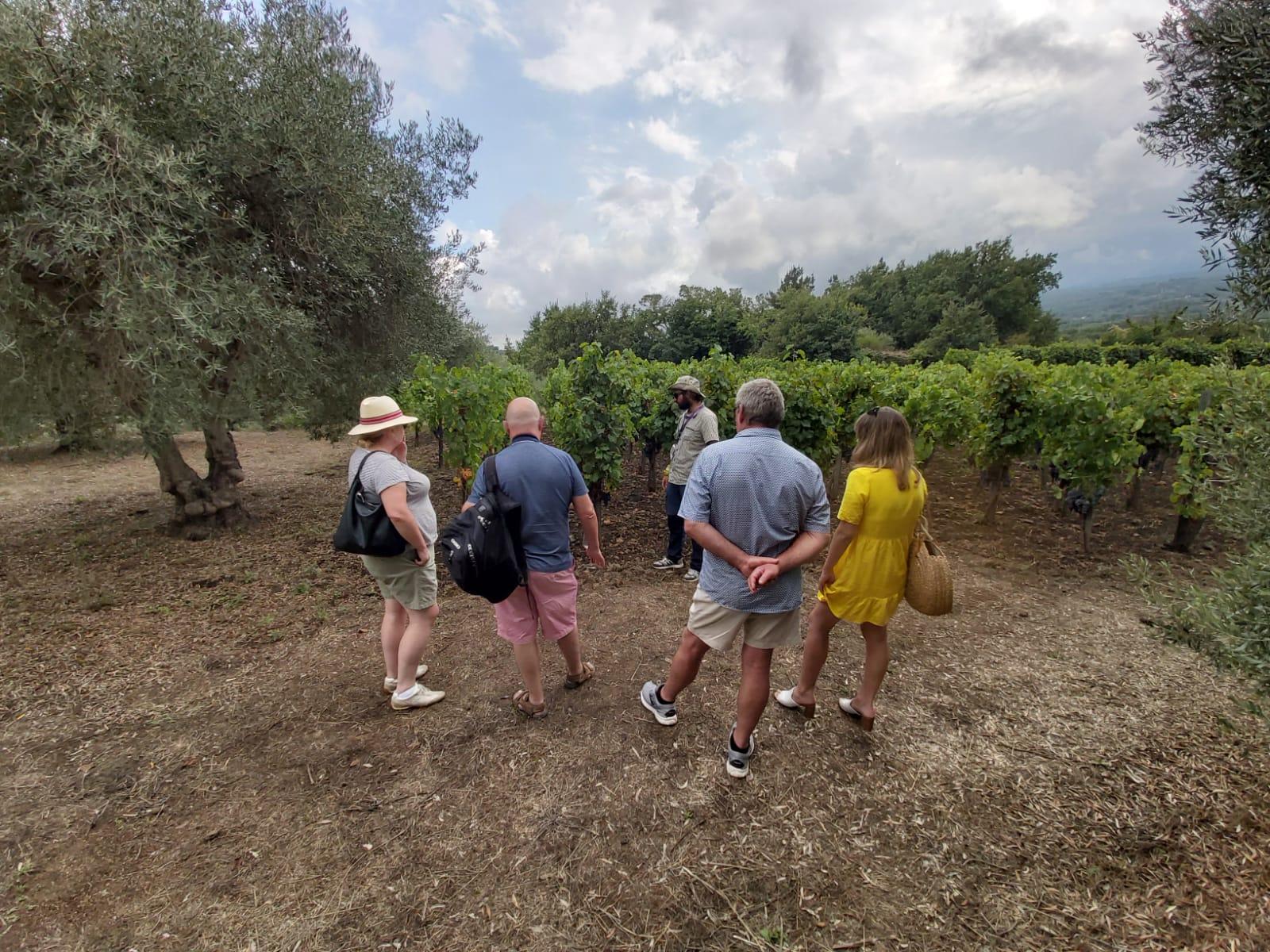 viñedo en castiglione di sicilia